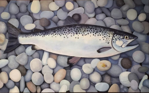 Trout on Pebbles